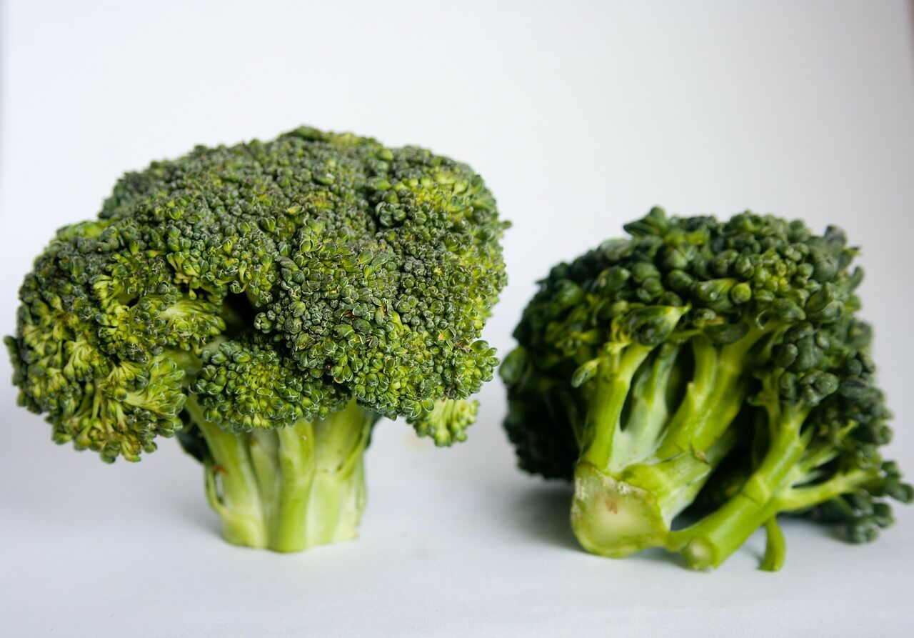 Can Dogs Eat Broccoli Florets?