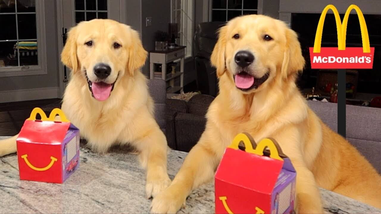 Can Dogs Eat McDonald's Ice Cream, French Fries, Pancakes & Chicken Nuggets?