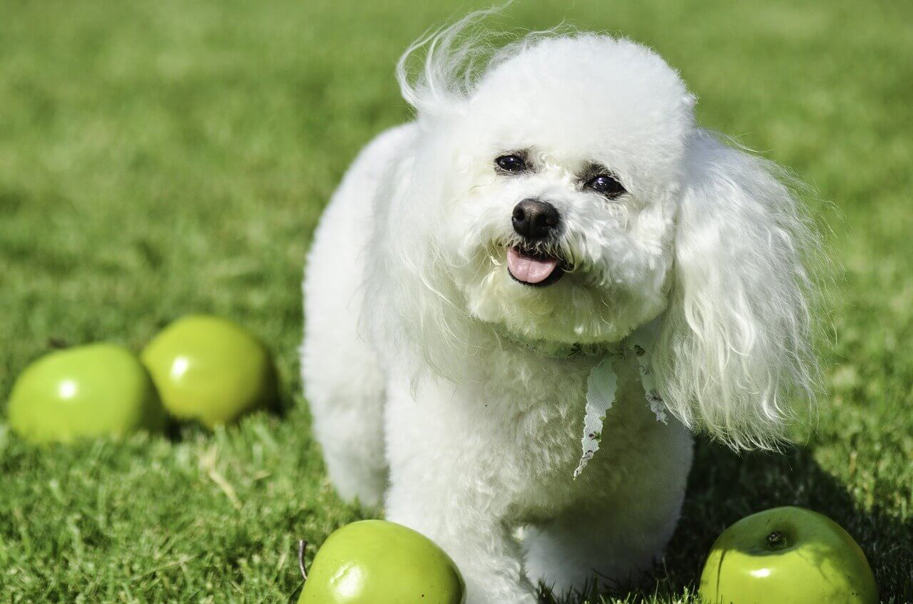 Can dogs eat green apples?