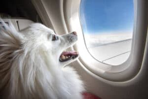 Do Dogs Go to the Bathroom on a Plane? [What to Do if He Poops or Pees]