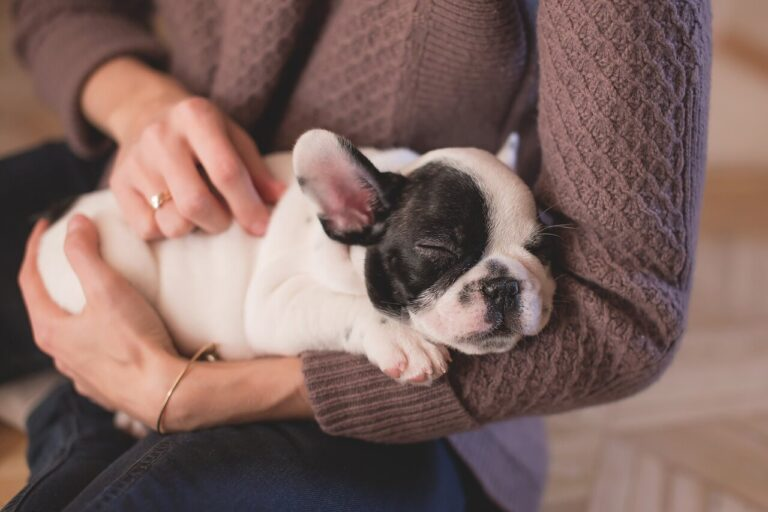 When Do Bulldogs Stop Teething? And What to Feed Them
