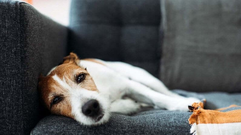 How to Euthanize a Dog with Over-the-Counter Drugs