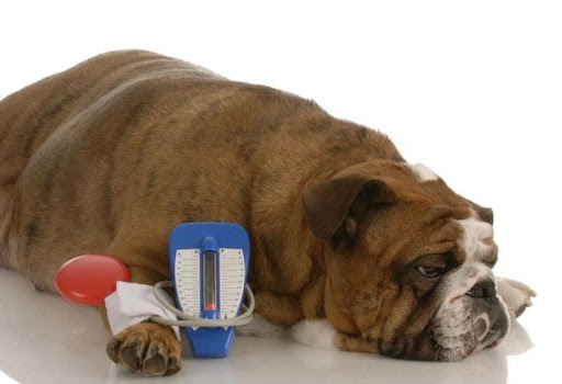 When Is It Time To Put a Diabetic Dog Down?