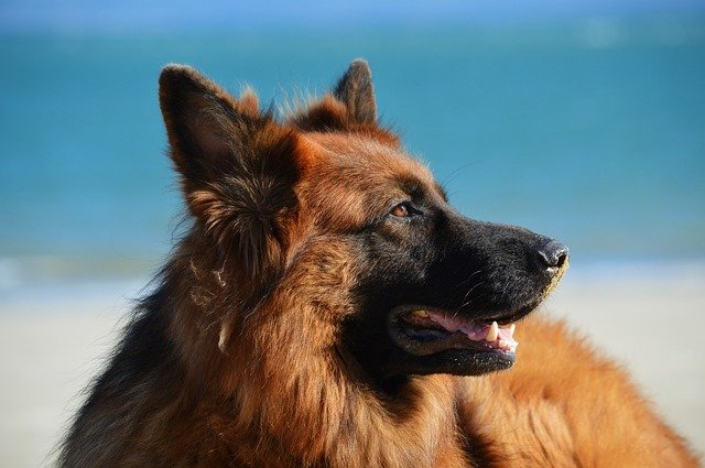 4 Tips for Keeping Your Dog Healthy This Summer